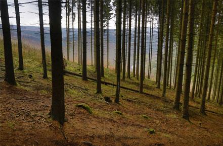 Reemplazando Bosques
