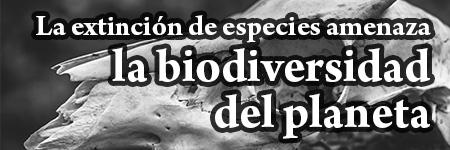 La extinción de especies amenaza la biodiversidad del planeta