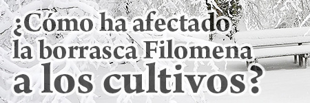 ¿Cómo ha afectado la borrasca Filomena a los cultivos?