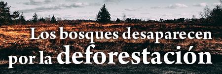 Los bosques desaparecen por la deforestación