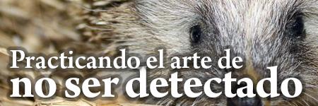 Practicando el arte de'no ser detectado'