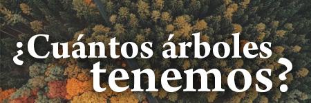¿Cuántos árboles hay en la tierra?